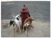 dogs-pee